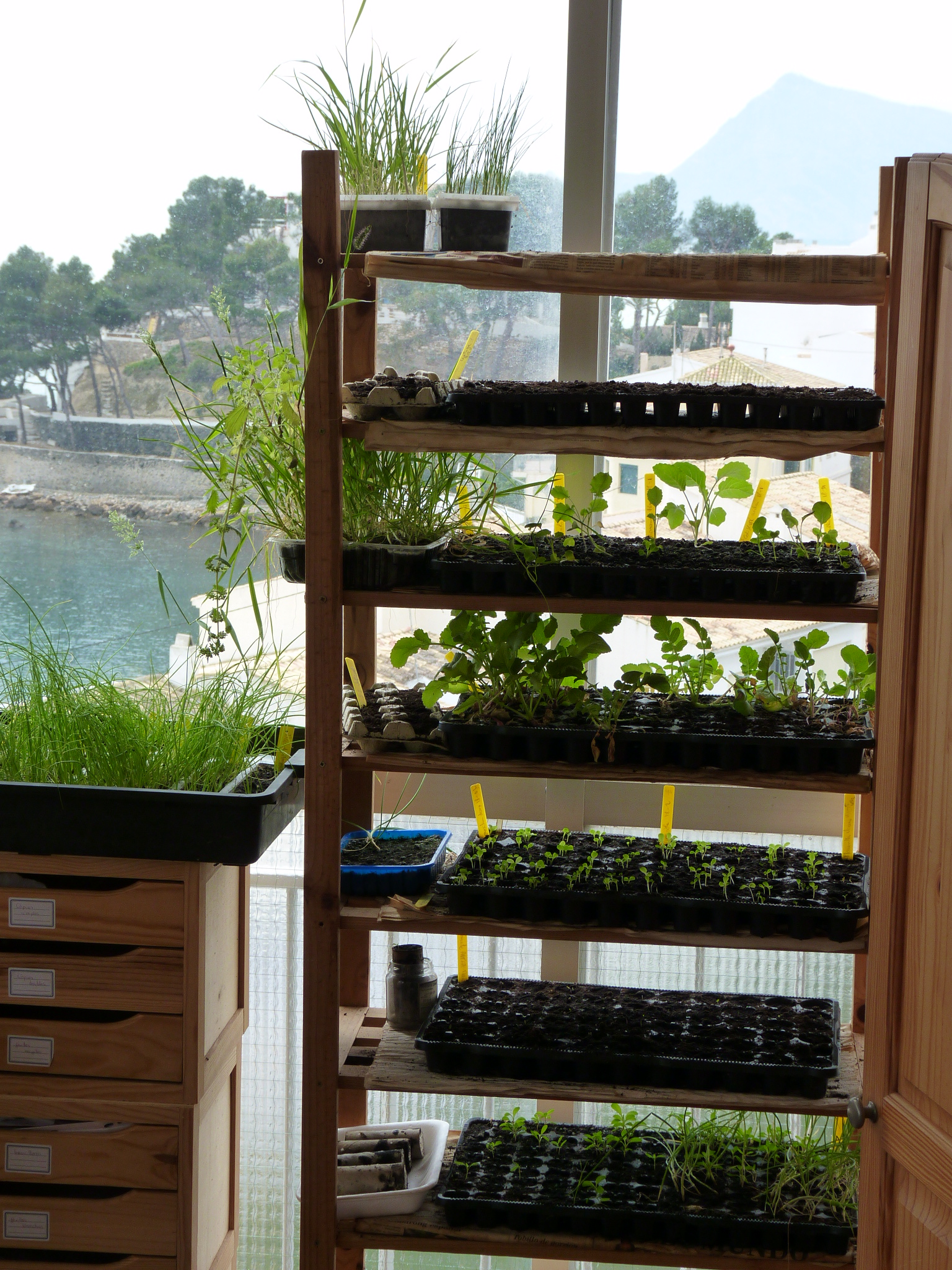 La calidad de los plantones comprados en viveros o - Estanteria para plantas ...
