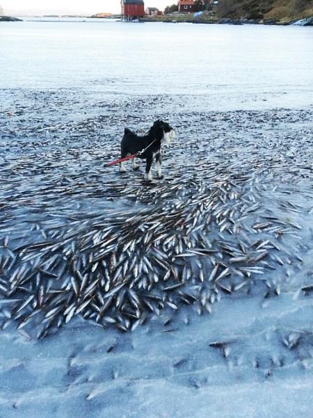 poissons congelés 4