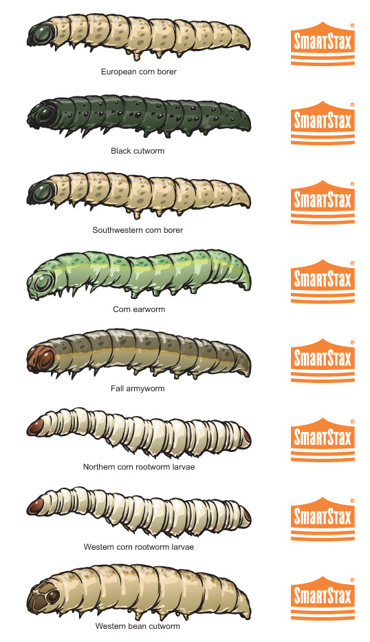 SmartStax_insect_spectrum_All