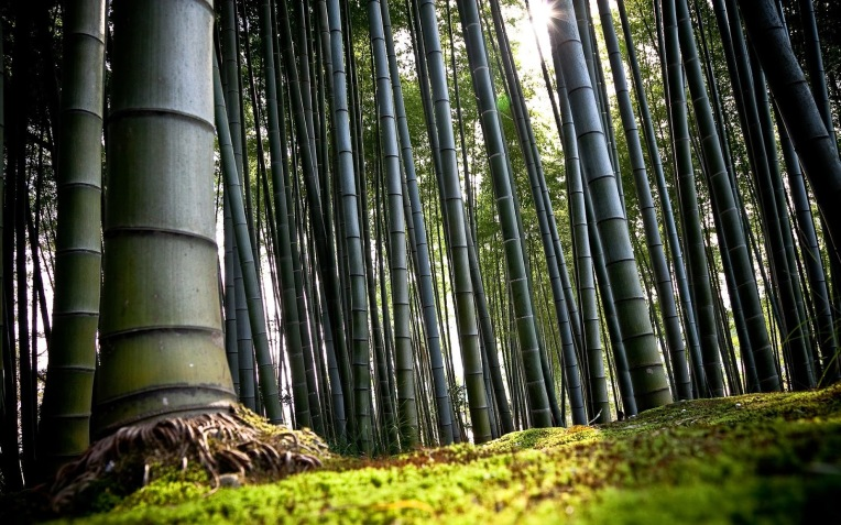 Resultado de imagen de photos helechos y bambus